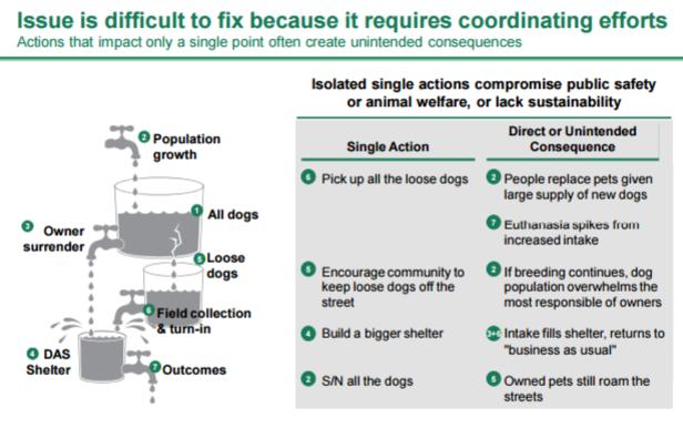 BCG presentation: Solving Dallas' stray dog problem