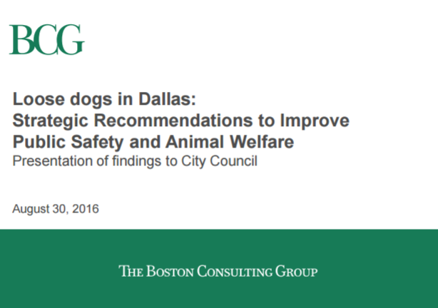 BCG report: Loose dogs in Dallas1 Comment